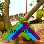 Чудо-дерево: продукты на ветках